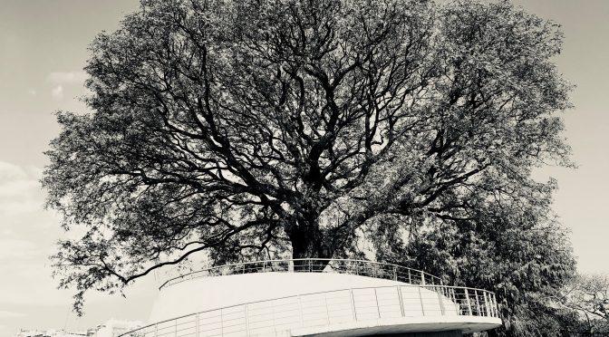La torre del árbol